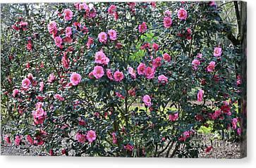 Dreamy Camellia Tree Canvas Print by Carol Groenen