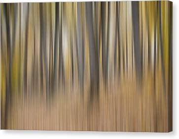 Muted Canvas Print - Dreamy Forest by Tom Mc Nemar