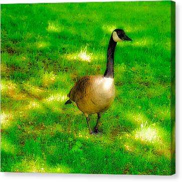 Dreamy Goose Canvas Print by Ronald Watkins