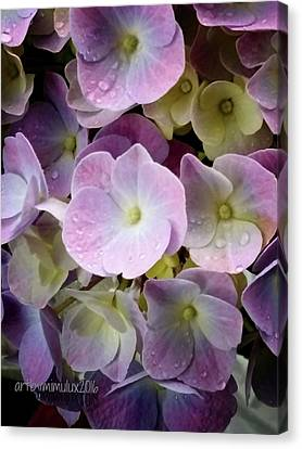 Canvas Print featuring the photograph Dreamy Hydrangea by Mimulux patricia no No