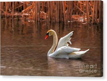 Canadian Marsh Canvas Print - Dreamy by Lois Bryan