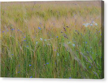 Dreamy Meadow Canvas Print