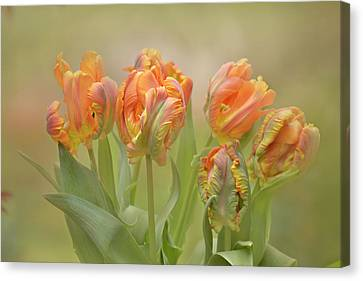 Canvas Print featuring the photograph Dreamy Parrot Tulips by Ann Bridges