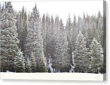 Canvas Print featuring the photograph Dreamy Pine Snow Forest Landscape by Andrea Hazel Ihlefeld