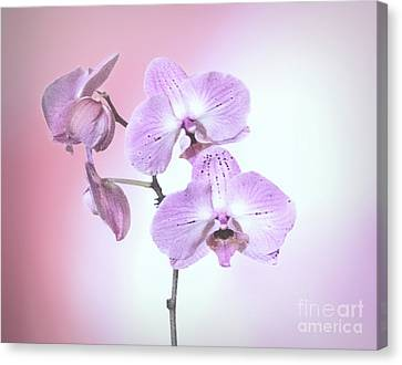 Canvas Print featuring the photograph Dreamy Pink Orchid by Linda Phelps