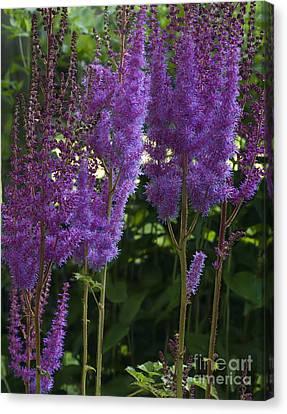 Dreamy Purple Canvas Print by Robert Pilkington