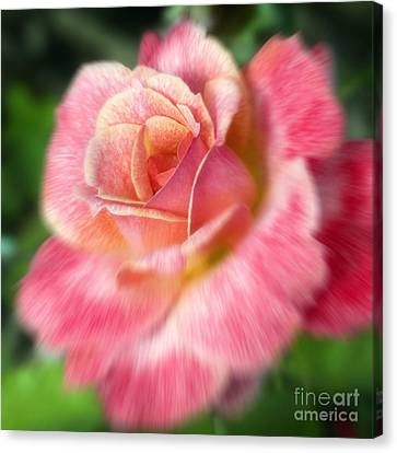 Dreamy Rose Canvas Print by Jeannie Burleson