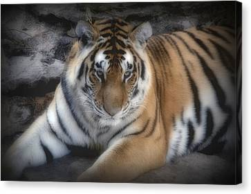 Dreamy Tiger Canvas Print by Sandy Keeton
