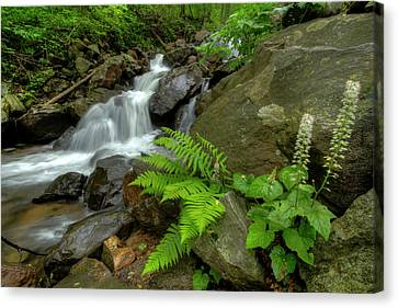 Canvas Print featuring the photograph Dreamy Waterfall Cascades by Debra and Dave Vanderlaan