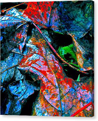 Drenched In Color Canvas Print by Gwyn Newcombe