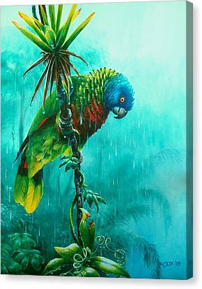 Drenched - St. Lucia Parrot Canvas Print by Christopher Cox
