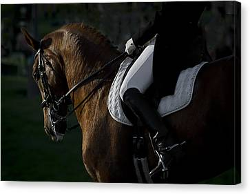 Canvas Print featuring the photograph Dressage D5284 by Wes and Dotty Weber