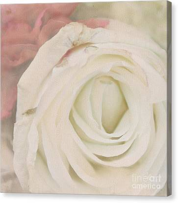 Dressed In White Satin Canvas Print by Cindy Garber Iverson