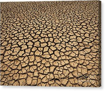 Canvas Print featuring the photograph Dried And Cracked Soil In Arid Season. by Tosporn Preede
