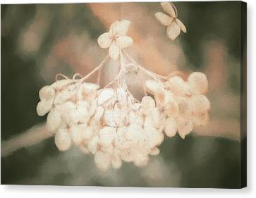 Painted Details Canvas Print - Dried Hydrangea by Terry Davis
