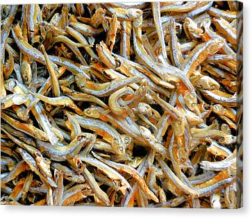Dried Small Fish 1 Canvas Print by Lanjee Chee