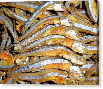 Dried Small Fish 3 Canvas Print by Lanjee Chee