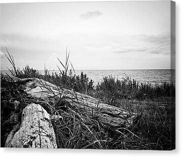 Canvas Print featuring the photograph Drift Wood by Karen Stahlros