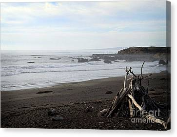Driftwood And Moonstone Beach Canvas Print by Linda Woods
