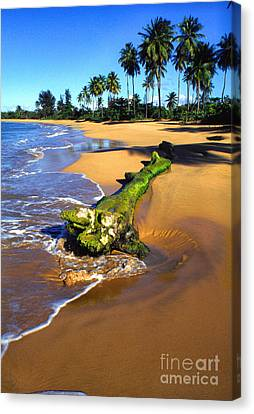 Driftwood And Palm Trees Canvas Print by Thomas R Fletcher