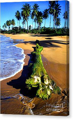 Driftwood And Palms Canvas Print by Thomas R Fletcher