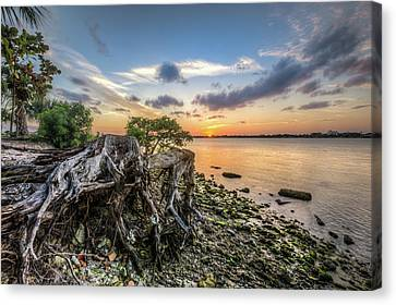 Canvas Print featuring the photograph Driftwood At The Edge by Debra and Dave Vanderlaan