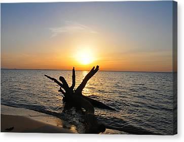 Ocean Inlet Canvas Print - Driftwood Beach by Bill Cannon