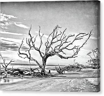 Canvas Print featuring the photograph Driftwood Beach - Black And White by Kerri Farley