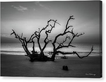 Driftwood Beach Dawn Jekyll Island Georgia Canvas Print by Reid Callaway