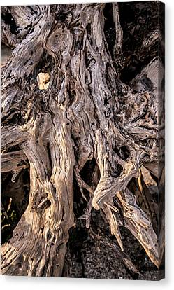 Canvas Print featuring the photograph Driftwood Close-up by Steven Ainsworth