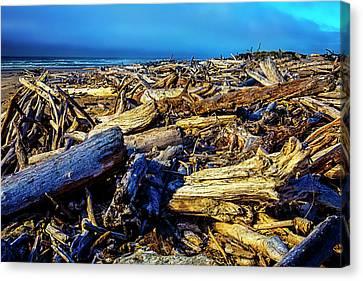 Driftwood Coastline Canvas Print by Garry Gay