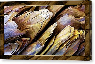 Driftwood Edges Canvas Print by ABeautifulSky Photography