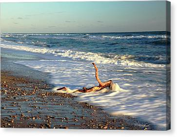 Driftwood In The Surf Canvas Print by Roupen  Baker