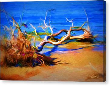 Driftwood Canvas Print by Ludwig Keck