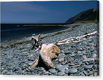 Driftwood On Rocky Beach Canvas Print by Sally Weigand
