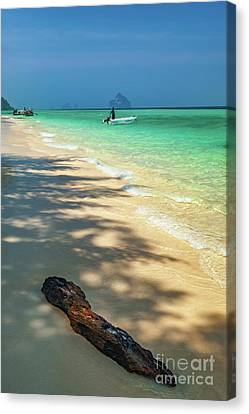 Driftwood On The Beach Canvas Print by Adrian Evans
