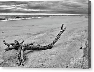 Driftwood On The Beach In Black And White Canvas Print by Paul Ward