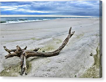 Driftwood On The Beach Canvas Print by Paul Ward