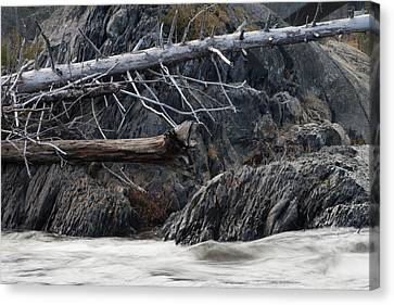Driftwood On The Rocks Canvas Print