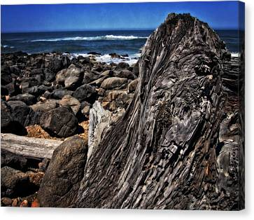 Driftwood Rocks Water Canvas Print by Thom Zehrfeld