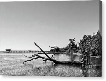 Canvas Print - Driftwood Tree In Lake - Bw by Kathleen K Parker