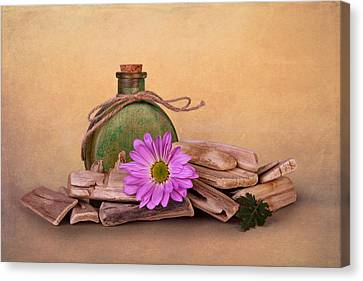 Driftwood With Daisy Canvas Print by Tom Mc Nemar
