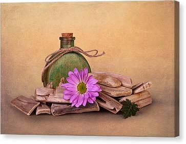 Driftwood Canvas Print - Driftwood With Daisy by Tom Mc Nemar