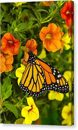 Drinking From A Flower Canvas Print by Garry Gay