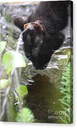Drinking Kitty Canvas Print by Wendy Coulson