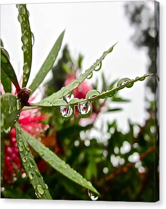 Drip And Drop Canvas Print by Gwyn Newcombe