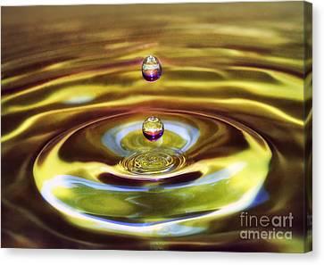 Drip Drop Canvas Print by Arnie Goldstein