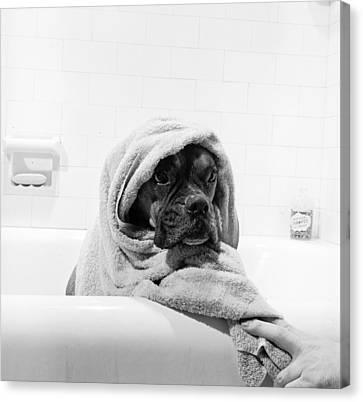 Domestic Bathroom Canvas Print - Dripping Doggy by Three Lions