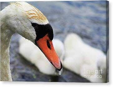 Drippy Nose Canvas Print