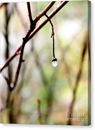 Drop Of Rain Canvas Print by Farzali Babekhan
